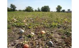 В саратовской области обнаружили двукратное превышение нормы по нитратам