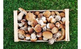 Радиация в грибах может в 20 раз превышать норму!